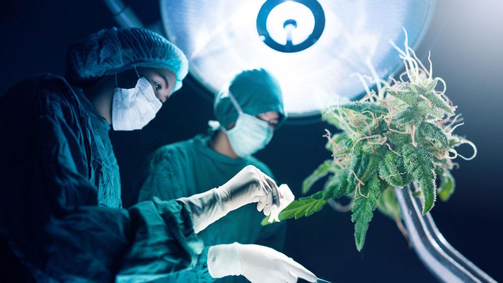 marijuana anesthetic