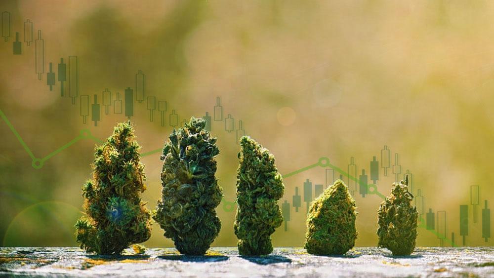 alberta retail cannabis stores