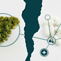 How Does Cannabis Interact with Other Drugs?