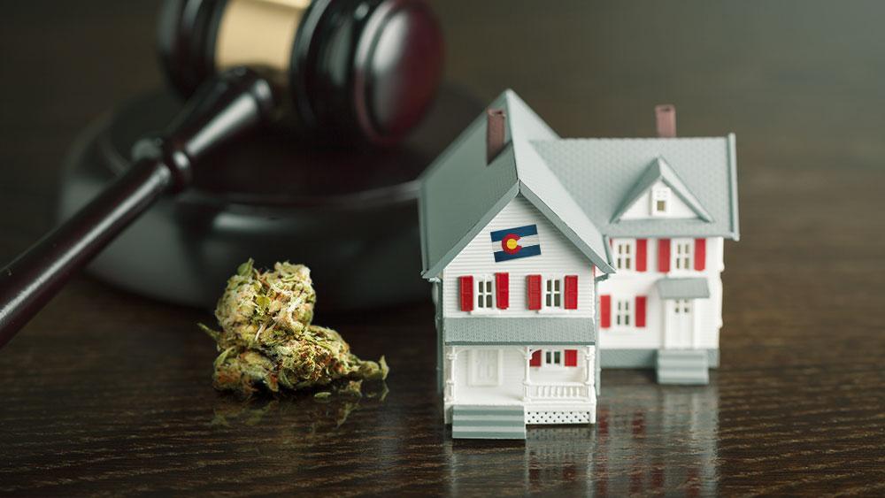 Colorado-cannabis-black-market-arrests