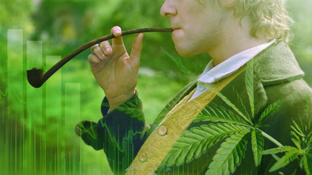 new zealand recreational cannabis