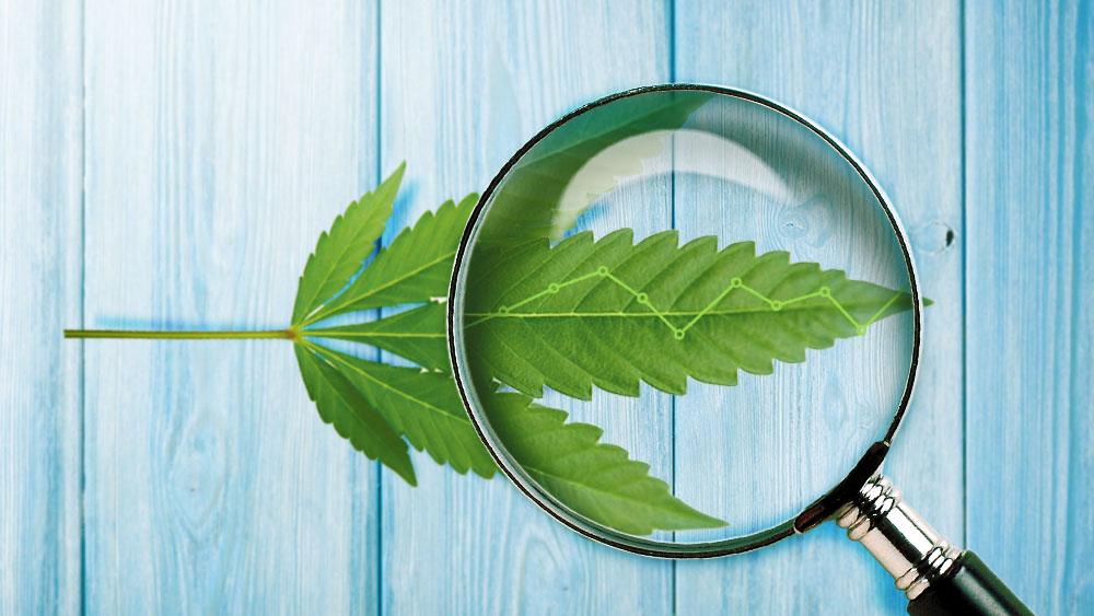 cannabis sales in ontario