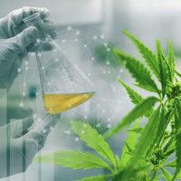 CannTrust faces cannabis shortage in Canada due to facility non-compliance