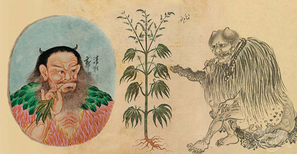 medical cannabis is ancient china