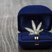 Can You Afford the Most Expensive Weed in the World?
