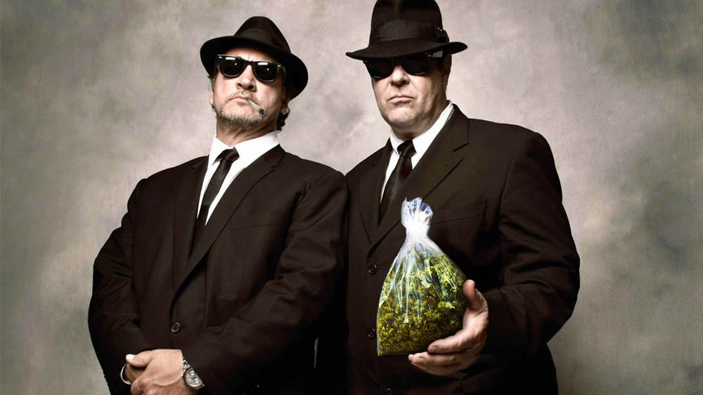 Blues Brother Cannabis