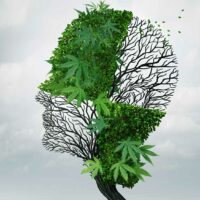 Australian researchers to embark on cannabis study for treating dementia