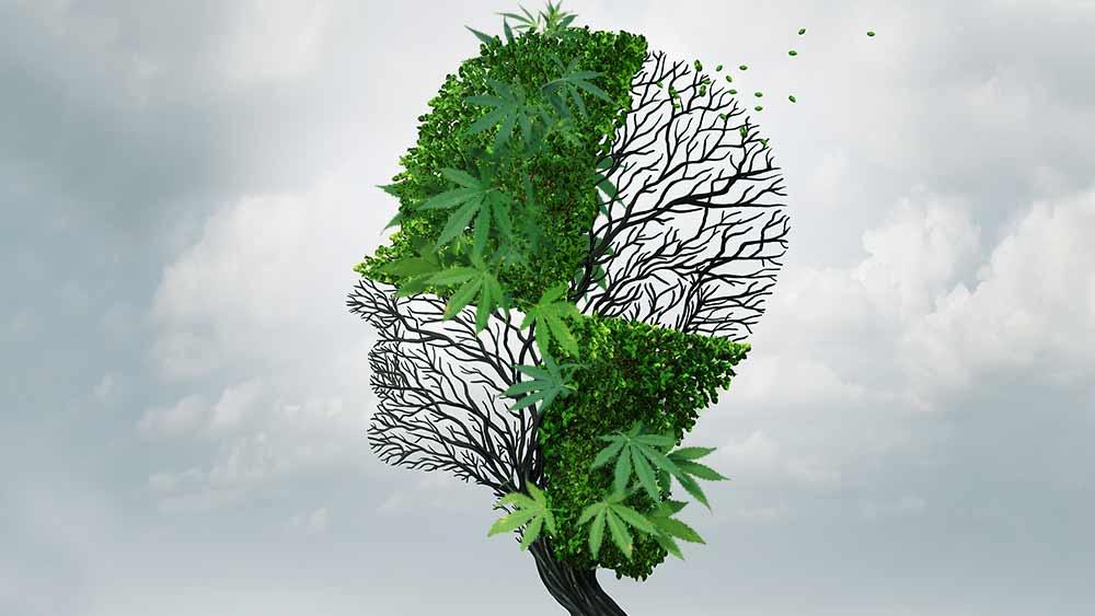 Cannabis-dementia-study