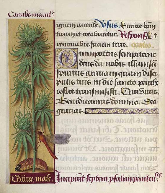 Hemp in ancient Europe