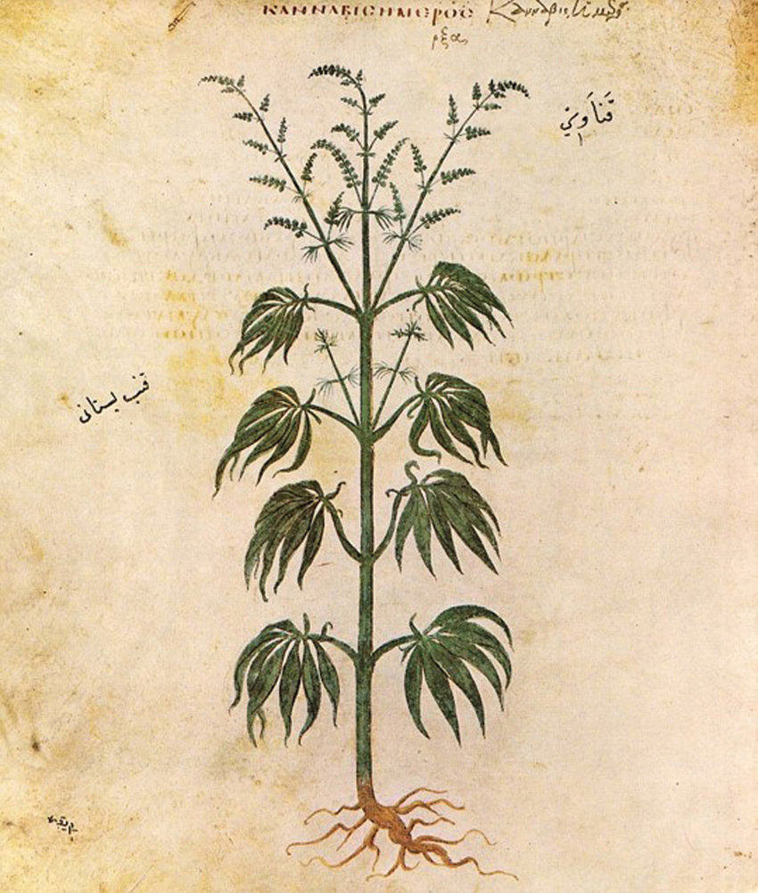 The Weed Leaf: A Visual History From Cave Paintings to Hip Hop thumbnail