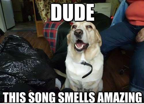Dude that song smells amazing