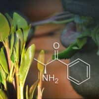 Khat: A Natural Stimulant, or a Harmful Drug?