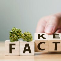 Misconceptions About Marijuana: 8 Common Weed Myths Busted