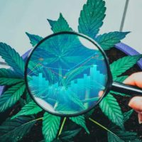 Canopy Growth stock volatility persists, investors look to Cannabis 2.0