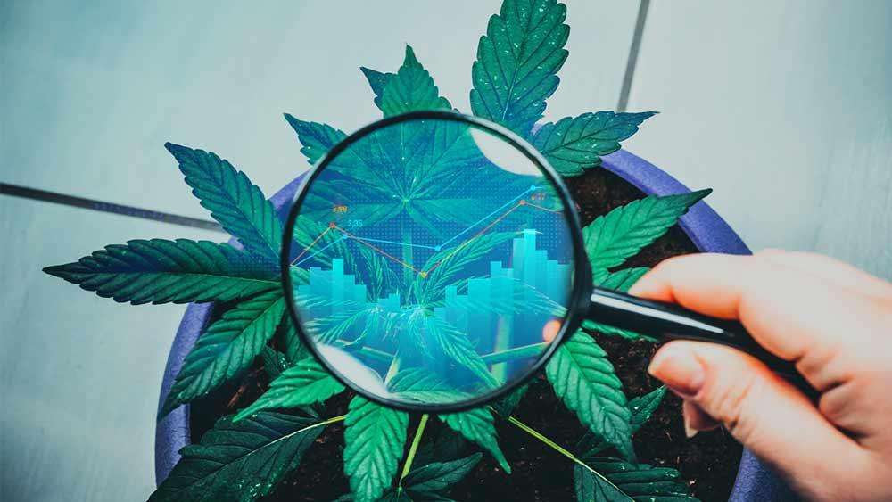Canopy-Growth-stocks