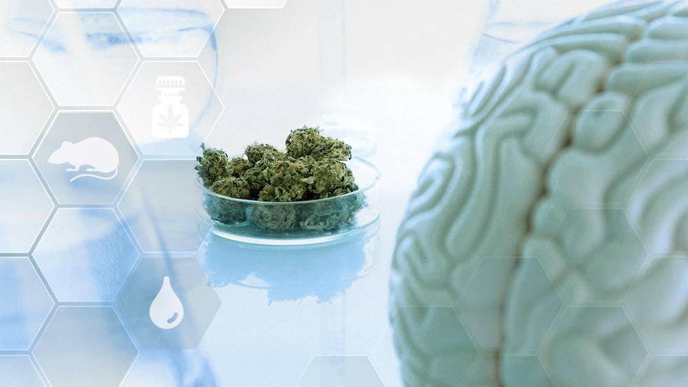 CBD Medical Study