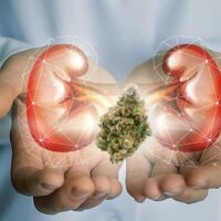 Marijuana and Kidney Disease: A Scientific Overview