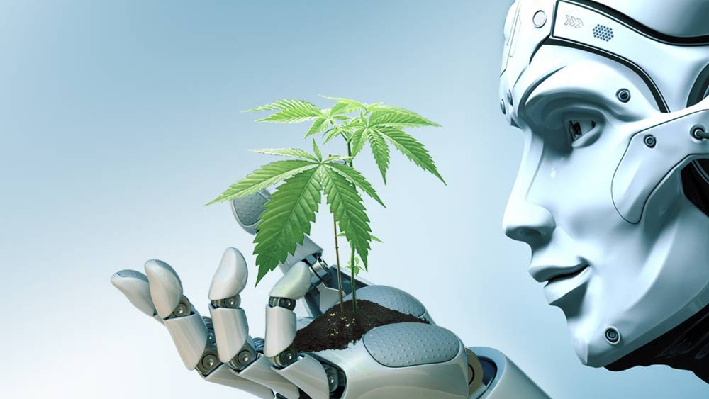 AI-farming-cannabis