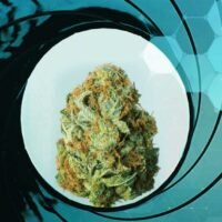 Agent Orange Weed: Top Choice for Medical Users