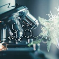 Exploring High THCV Strains and How They Are Valuable to Cannabis Users