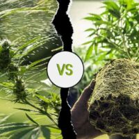 Indoor vs Outdoor Weed:  Which is Better?