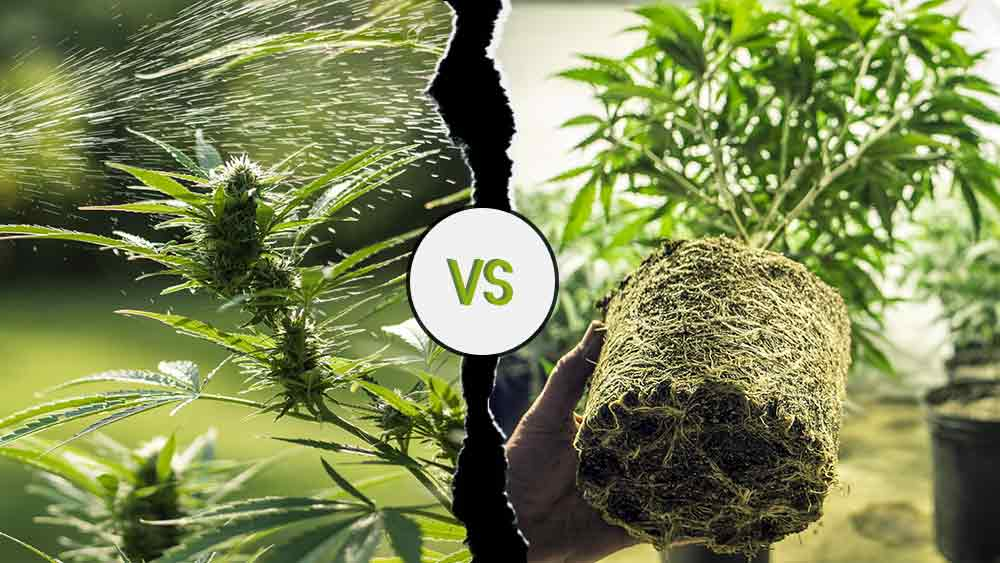 Indoor vs outdoor weed