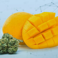 Mango and Weed – The Winning Duo for a Tropical High