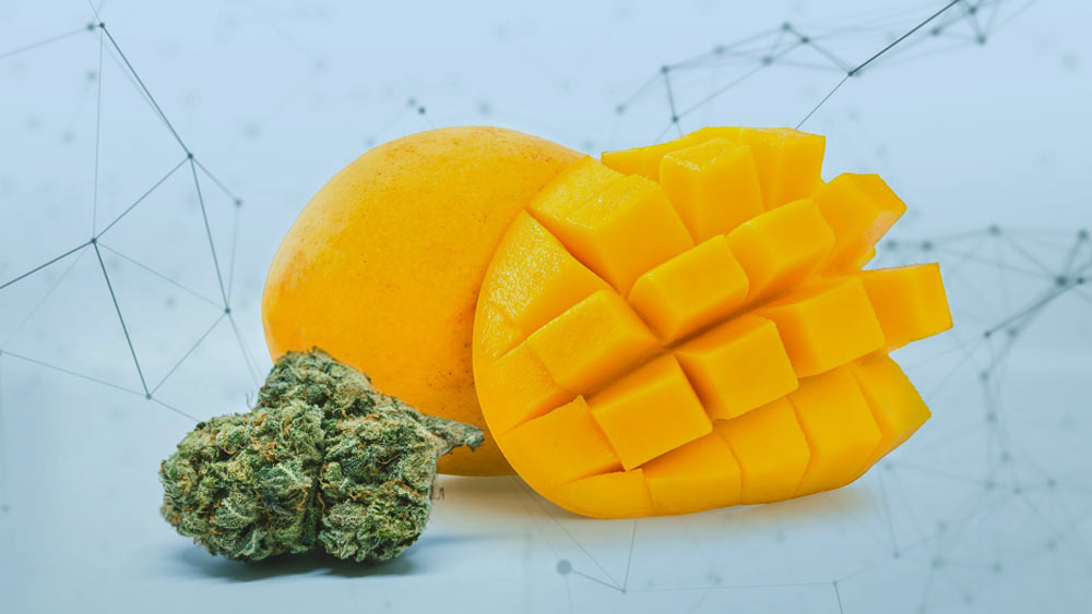 Mango and weed