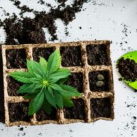 The Journey Of Home Growing Weed