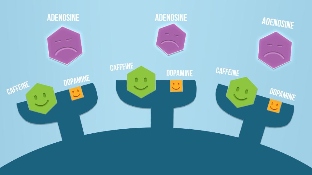 Caffeine and dopamine