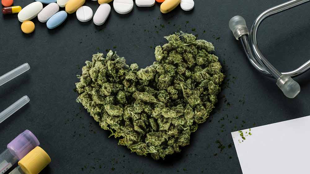 Heart-shaped marijuana buds