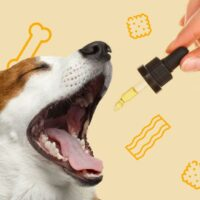 How Safe and Effective Are CBD Treats for Dogs?