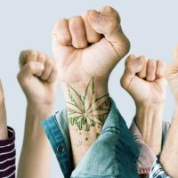 All You Ever Wanted to Know About Cannabis Activism (If You Knew It Existed)