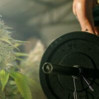 Marijuana and Weightlifting: Perfect Combination for Improved Focus and Muscle Growth