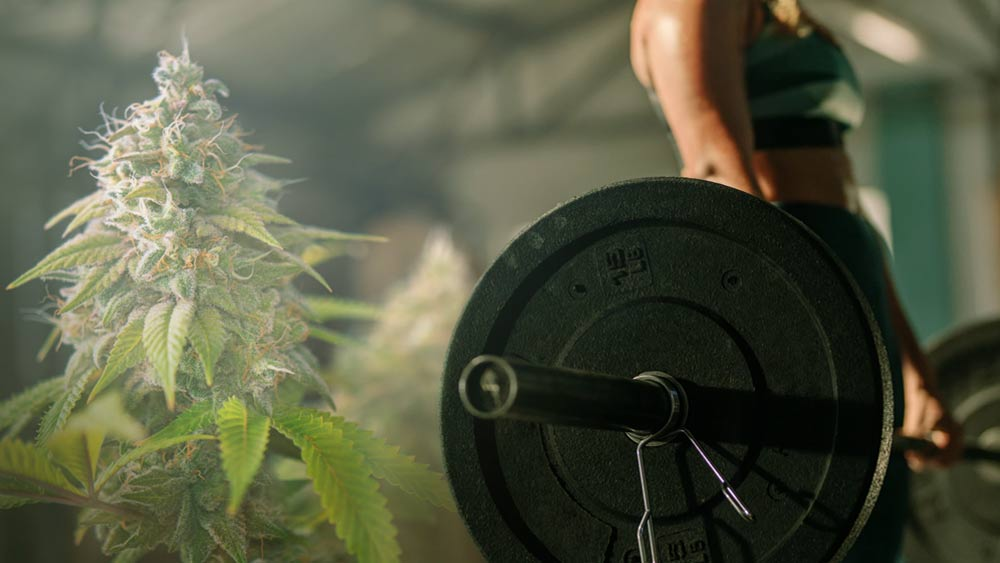 Cannabis and weight lifting