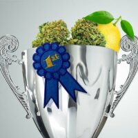 Super Lemon Haze: The Award Winning Strain