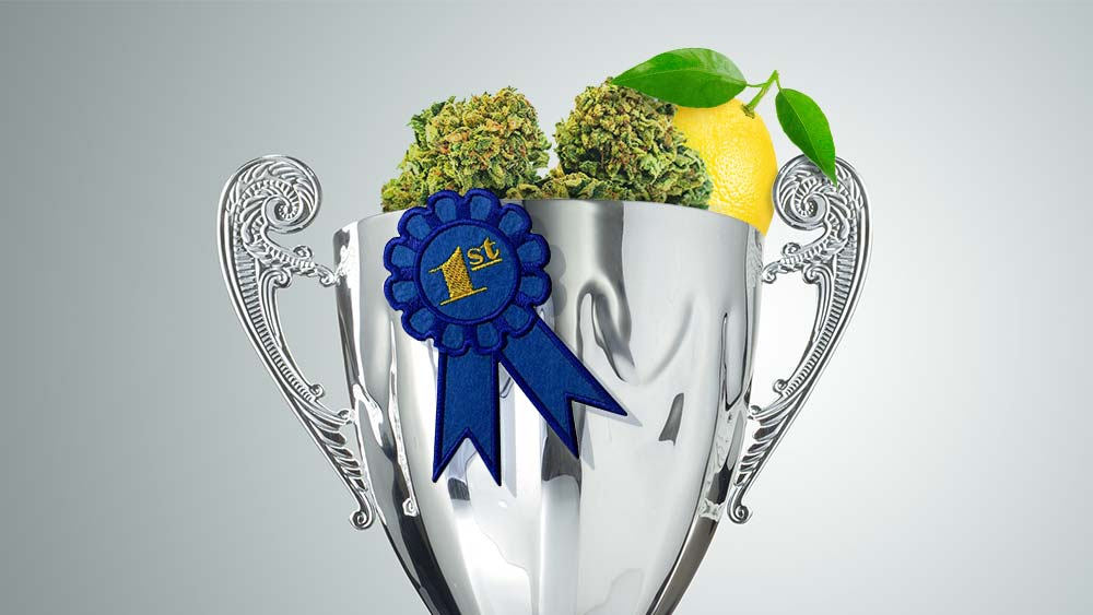 A cup filled with lemon and cannabis