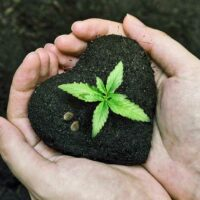How to Germinate Weed Seeds: Three Easy Methods