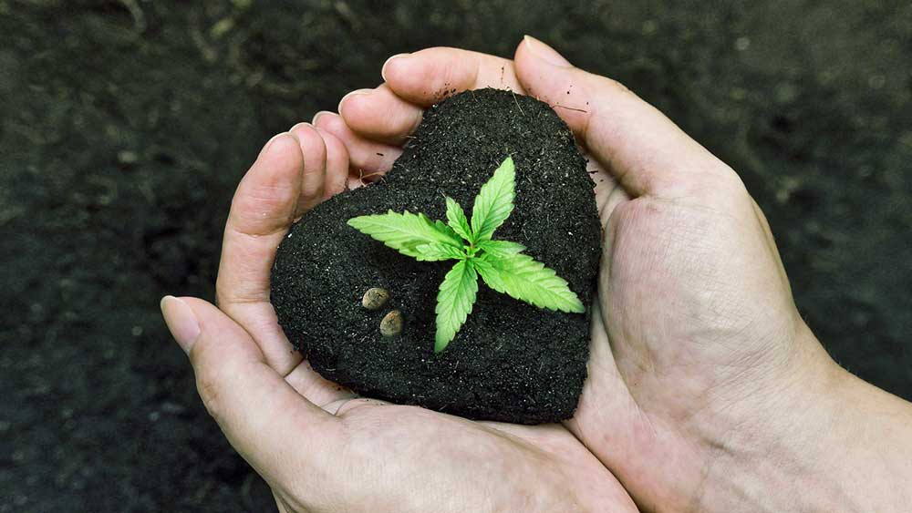 Hands holding heart shaped soil with a weed leaf
