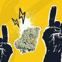 Rockstar Strain: Fine Mix of Healing and High-Inducing Properties