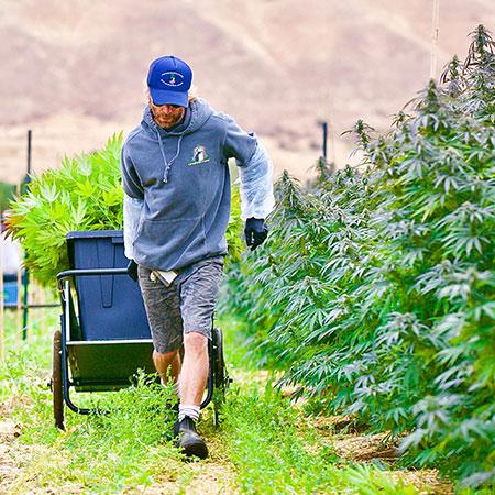 Weed harvest