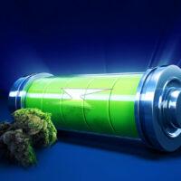 Best Sativa Strains for Energy: Top 7 Picks