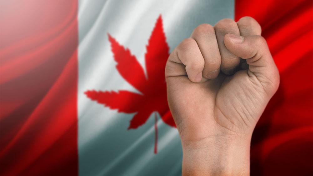 Cannabis-Company-Union