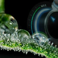 How to Increase Trichome Production?