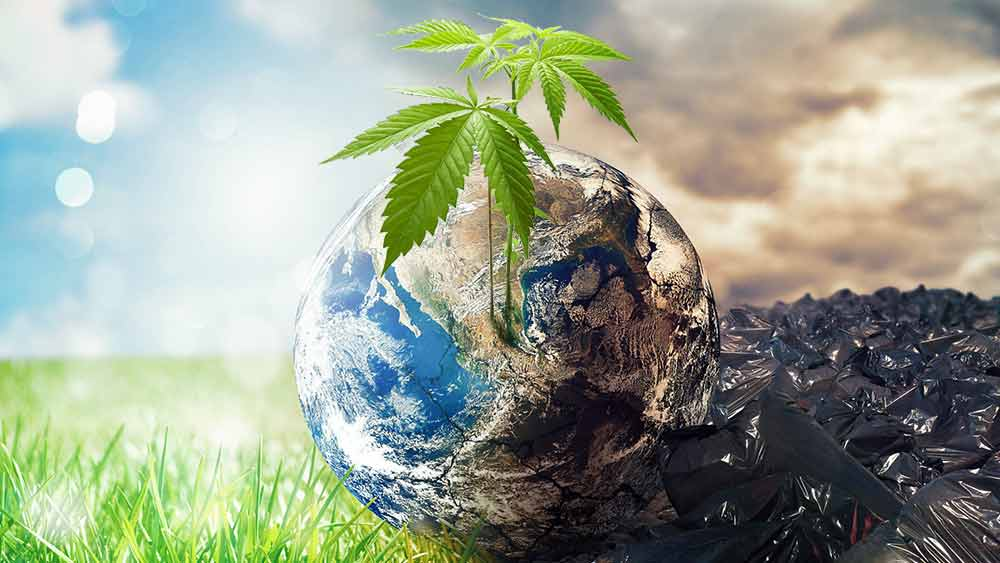 cannabis environmental disaster