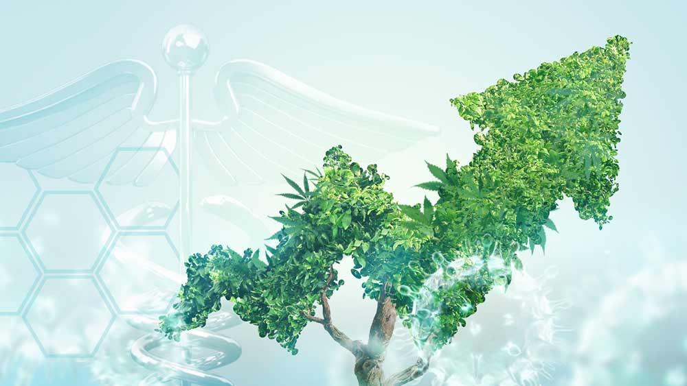 Cannabis-Stocks-Up