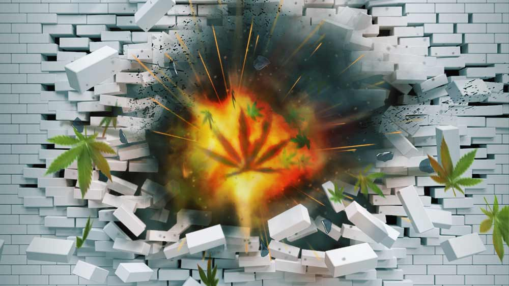 Cannabis-explosion-LA
