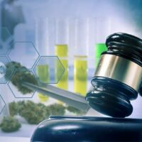 DoJ memo sheds new light on DEA's stalling of marijuana research expansion