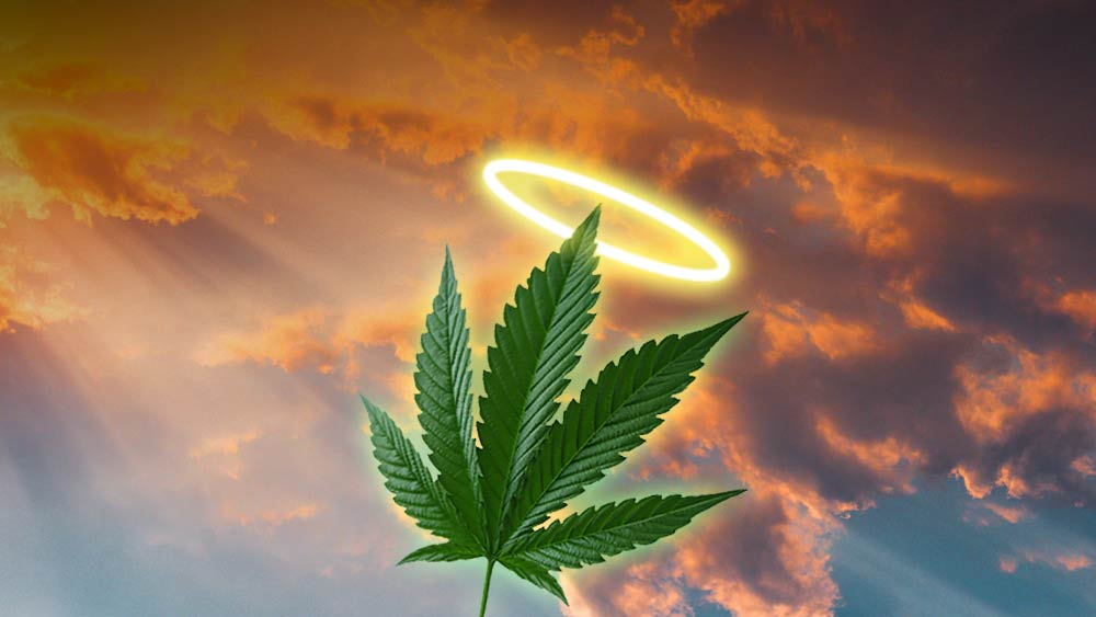 Cannabis plant with a halo above, to show how the majority of American's believe smoking marijuana is more moral than a range of other things such as abortion, gay relations, etc.