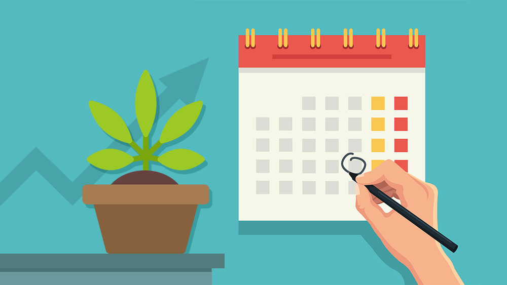 A cannabis plant next to a calendar